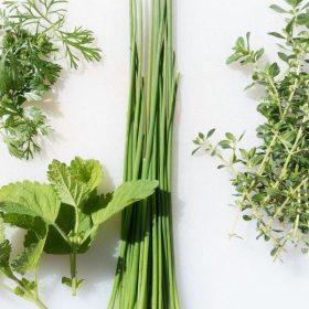 Szárított zöldfűszerek